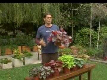 00026 bricomania jardineria - Bricomania Jardineria
