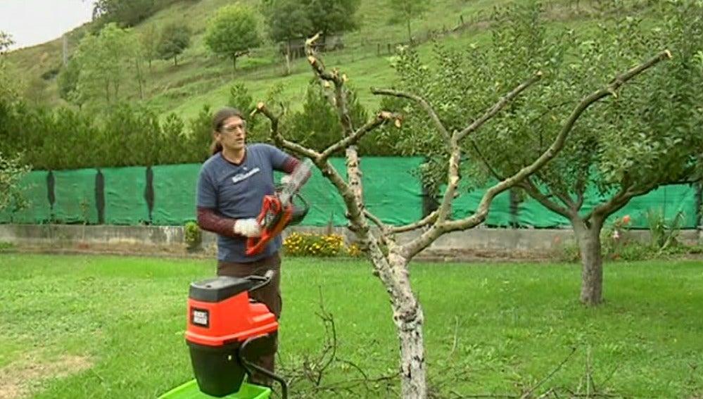 Apear un árbol