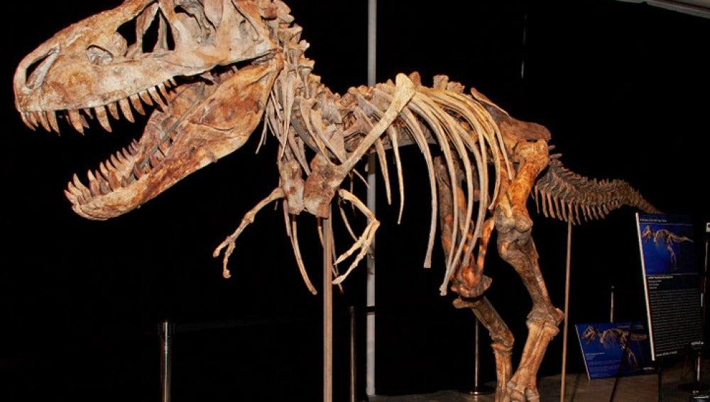 Esqueleto de tiranosaurio