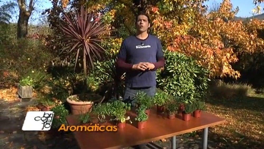 Antena 3 tv plantas arom ticas para cocinar - Plantas aromaticas exterior ...