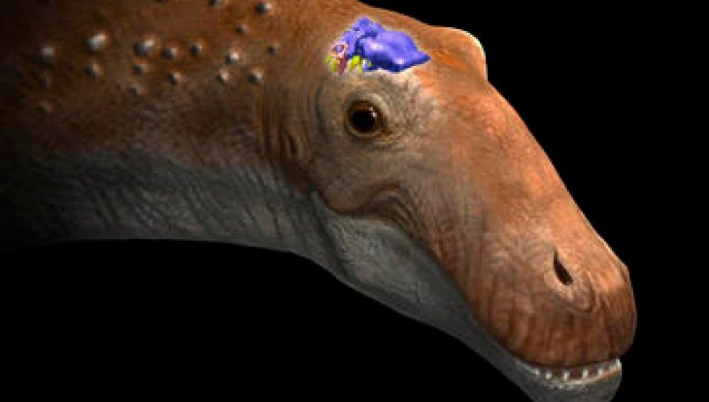 Representación de la cabeza de un saurópodo