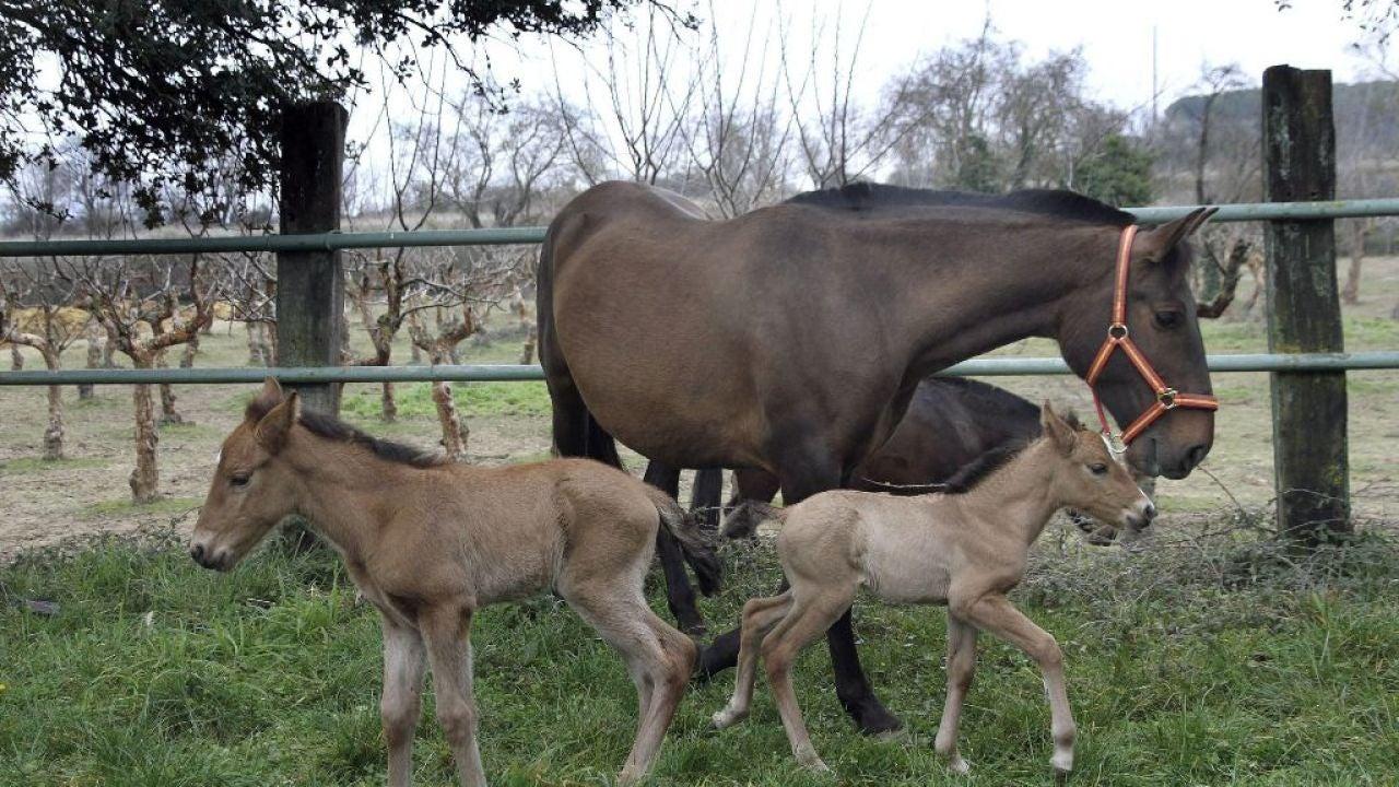 Ni compramos ni vendemos carne de caballo la empresa for Espejo publico hoy completo