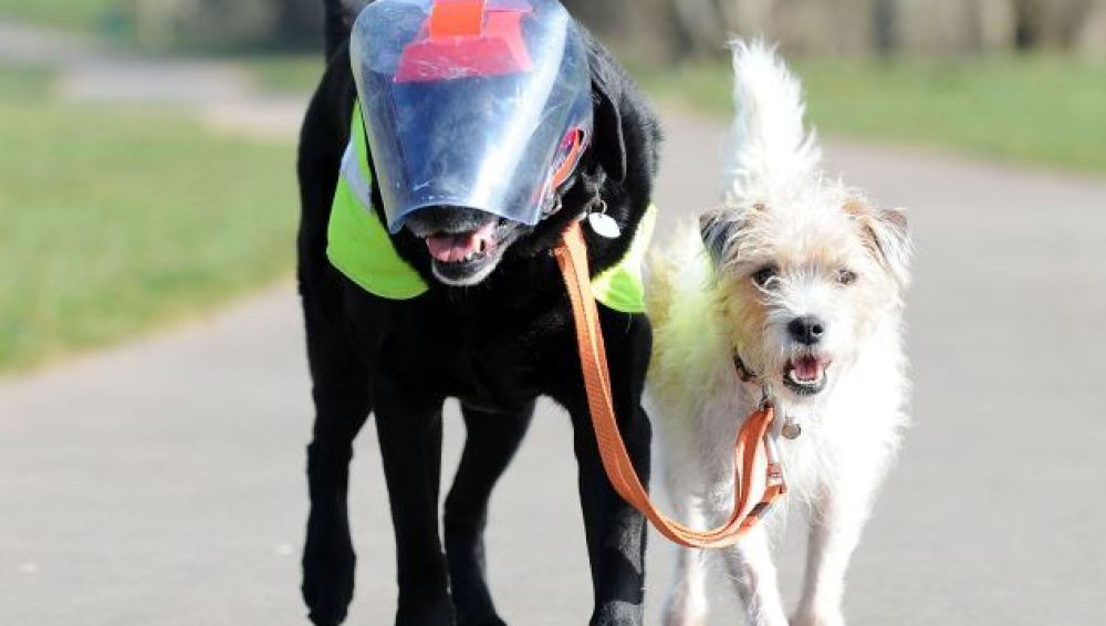 El perro y su perro guía
