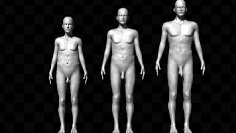 Modelos del estudio