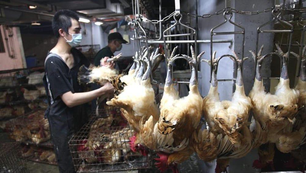 Un empleado cuelga pollos en garfios en un matadero del mercado de Huannan, en Taipei