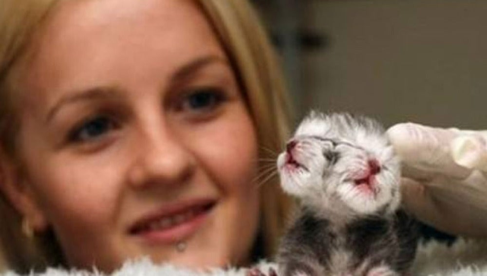 Nace Duecy, un gato con dos caras
