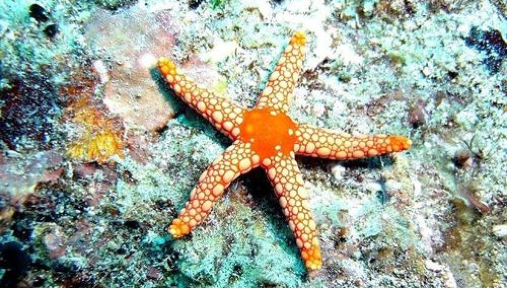 Imágen de archivo de una estrella de mar