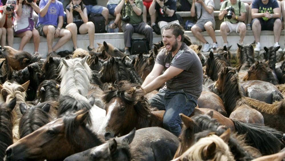 'Rapa das bestas' en Pontevedra