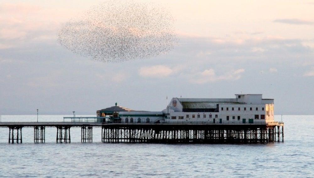 Nubarrones de pájaros, Inglaterra