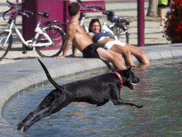 Un perro salta a una fuente debido al calor
