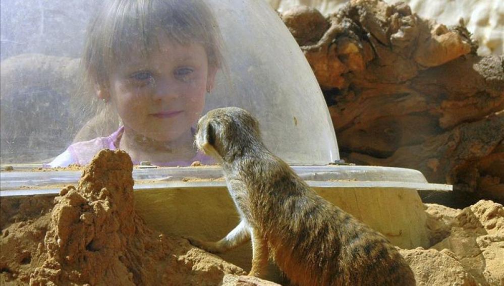 Una niña observa a un roedor del desierto gracias a una bóveda de cristal que respeta el ecosistema del animal