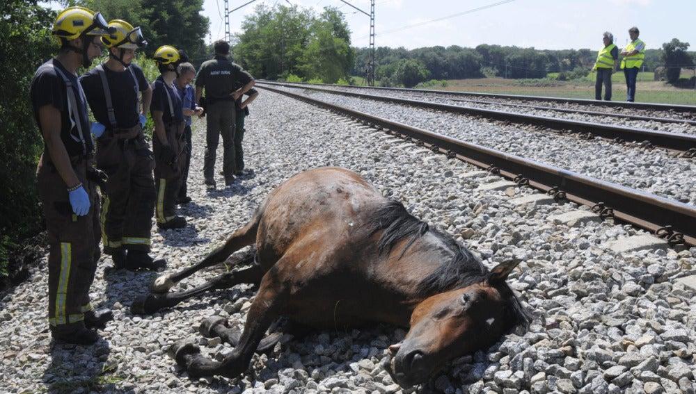 Uno de los caballos muertos en la vía
