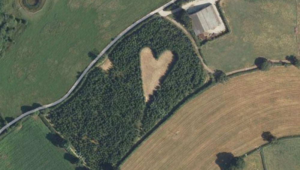 Bosque corazón en Reino Unido