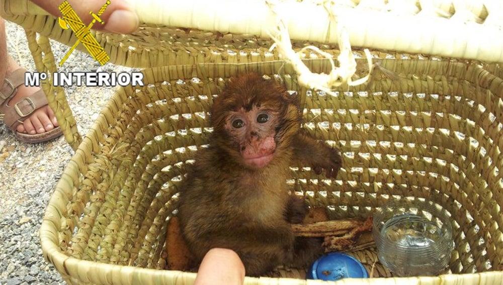 Localizado un mono que viajaba indocumentado hacía Francia.