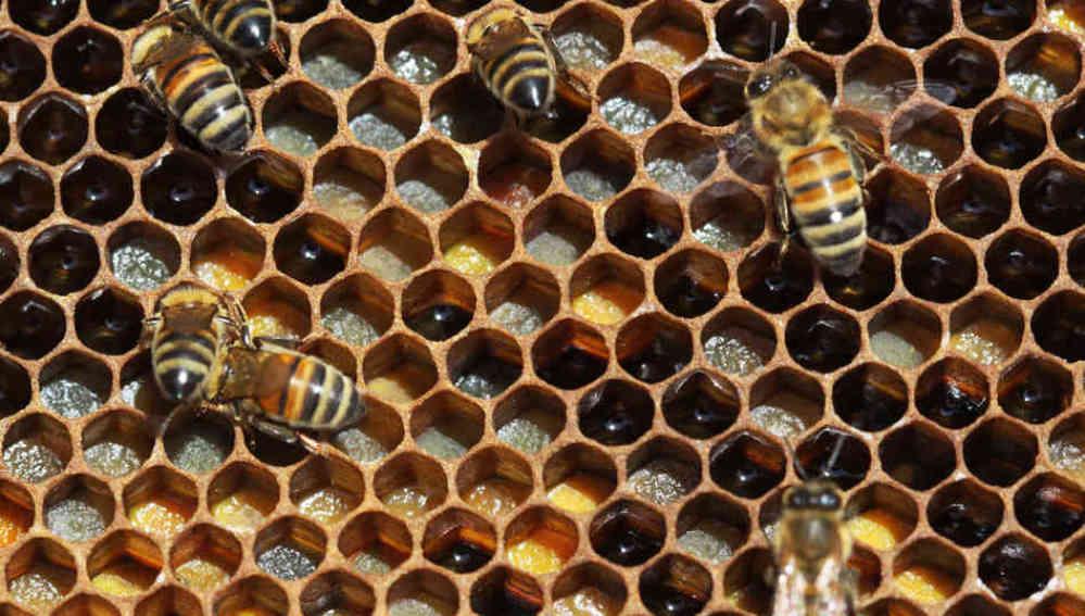 Imagen de un panal de abejas, constituido por formas geométricas