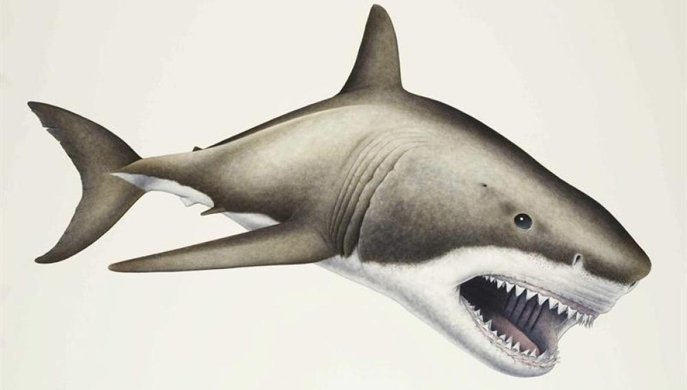 'Megalodón', el mayor depredador marino que ha existido