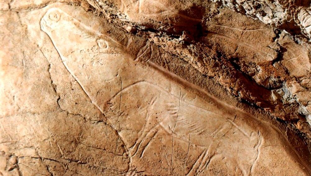 Vista de un grabado de un reno y un zorro polar de la cueva de Altxerri (País Vasco)