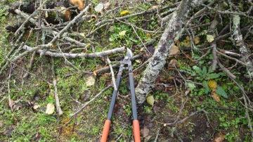 Residuos de la poda de árboles