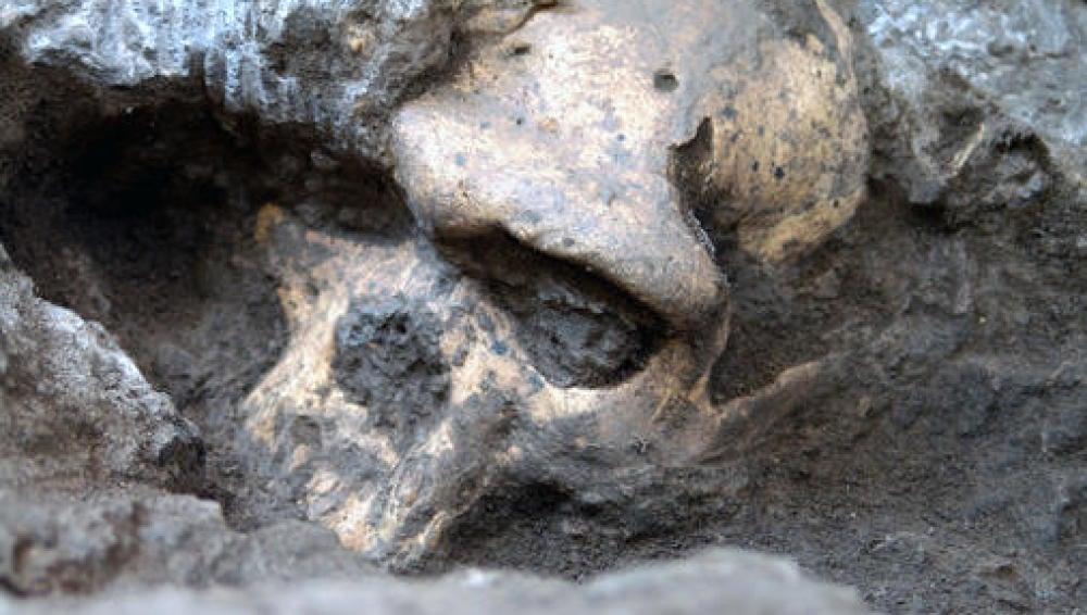 El rostro del cráneo 5, el 'Homo' que engloba a todos los conocidos
