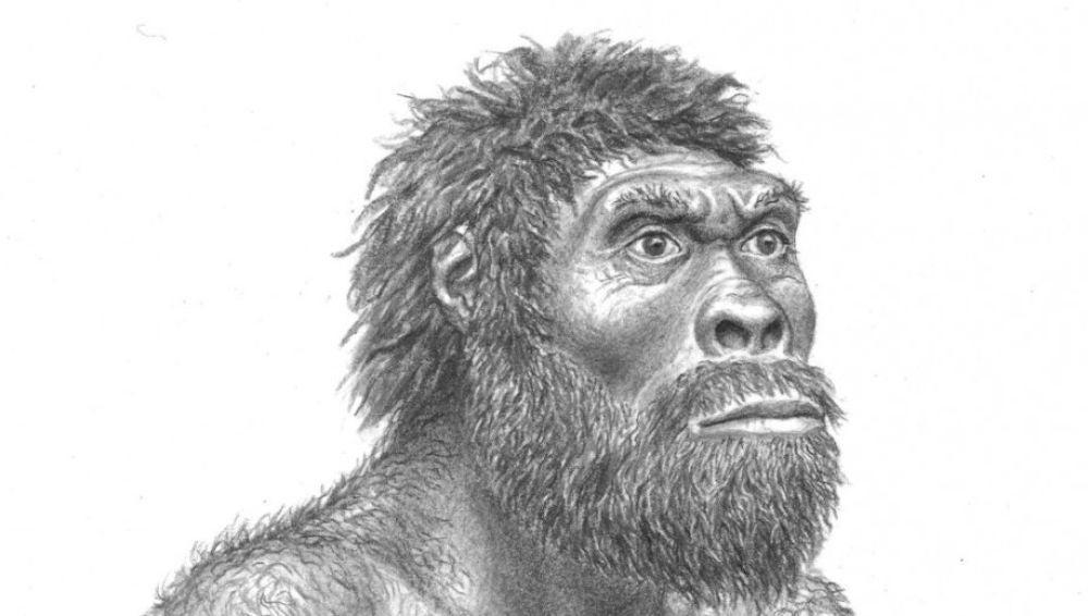Reconstrucción del Homo erectus de Dmanisi