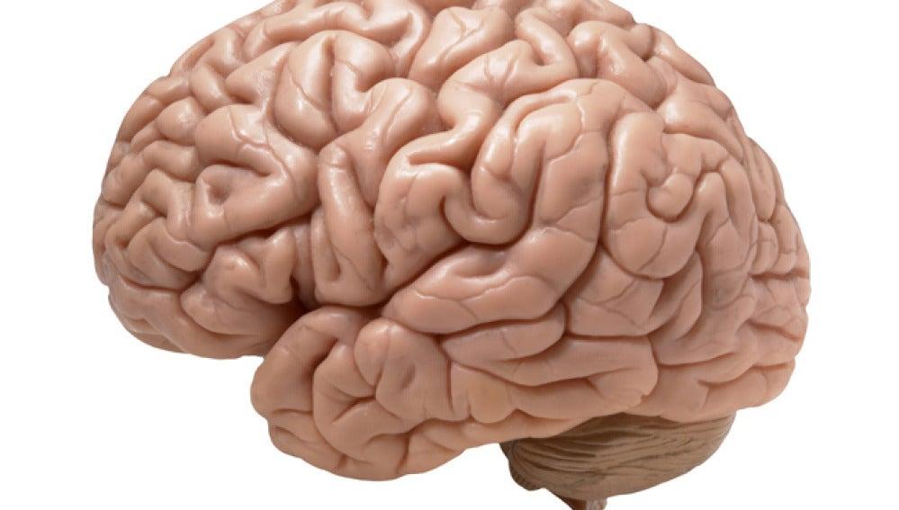 El libro de Bilbao descubre los cuidados del cerebro.