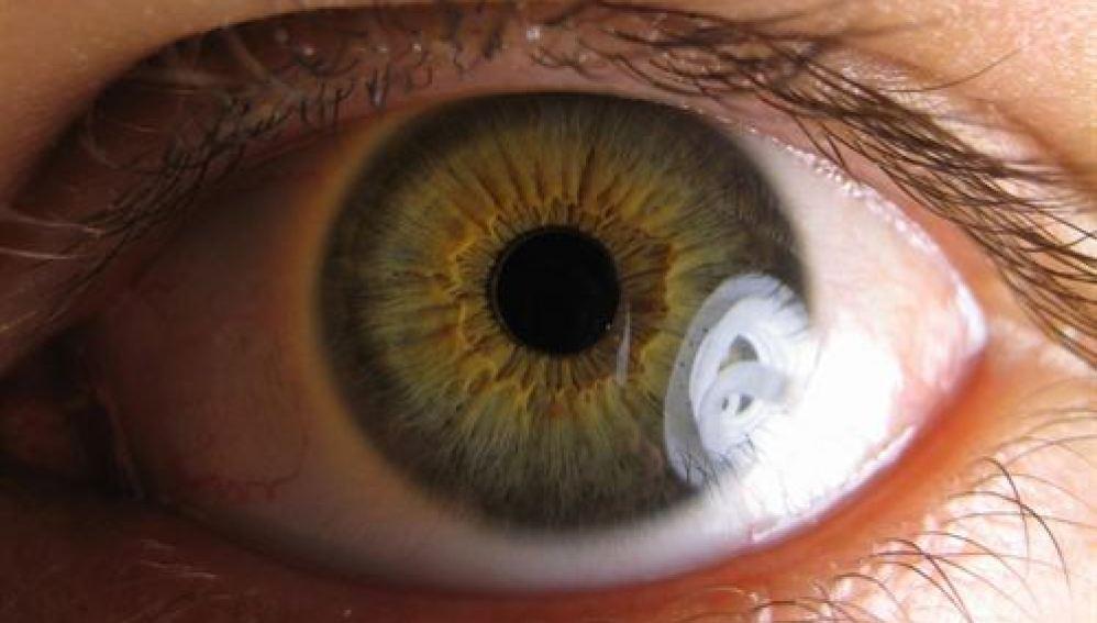 Describen una forma de estudiar la regulación de la glucosa a través del ojo