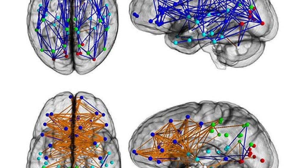 El comportamiento del cerebro masculino