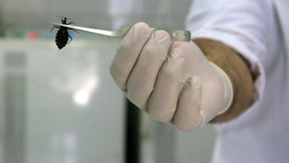 Divulgan un método prometedor contra el mal de Chagas