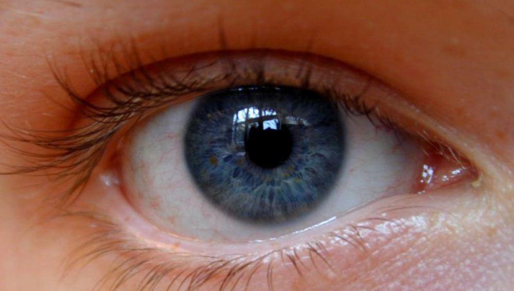 Imagen de un iris de color azul