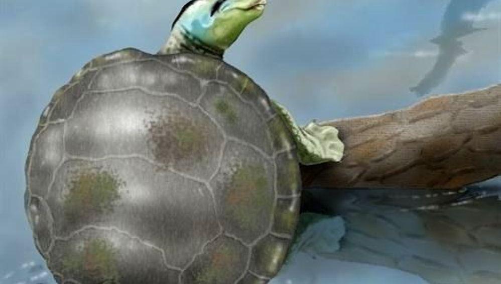 Recreación de la tortuga jurásica descubierta
