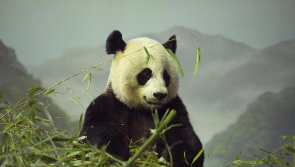 El panda Bao Bao