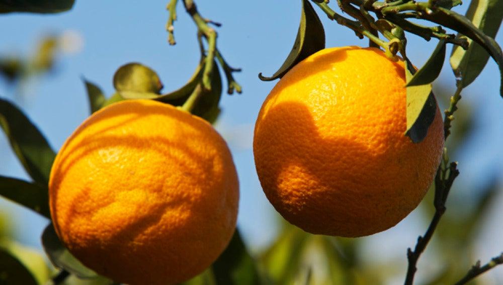 Naranjas más ricas en antioxidantes