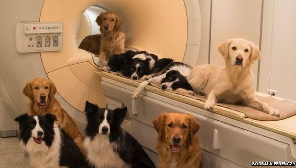 Resonancias magnéticas a perros