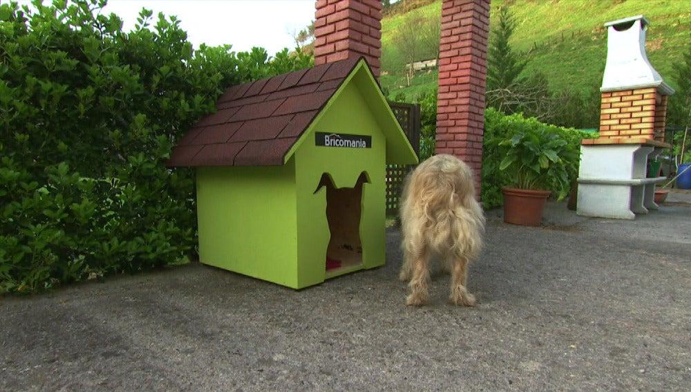 Te enseñamos cómo construir una caseta para el perro