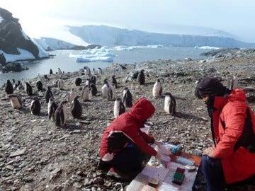 Expedición del INACH a la Antártida