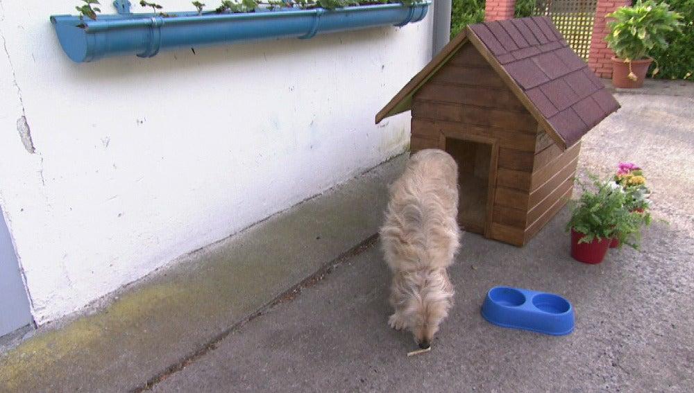 Enseñamos a instalar un revestimiento de lamas en una caseta de perro