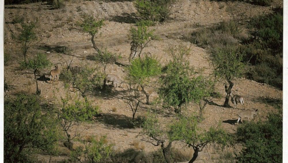 Sierra Espuña, en Murcia