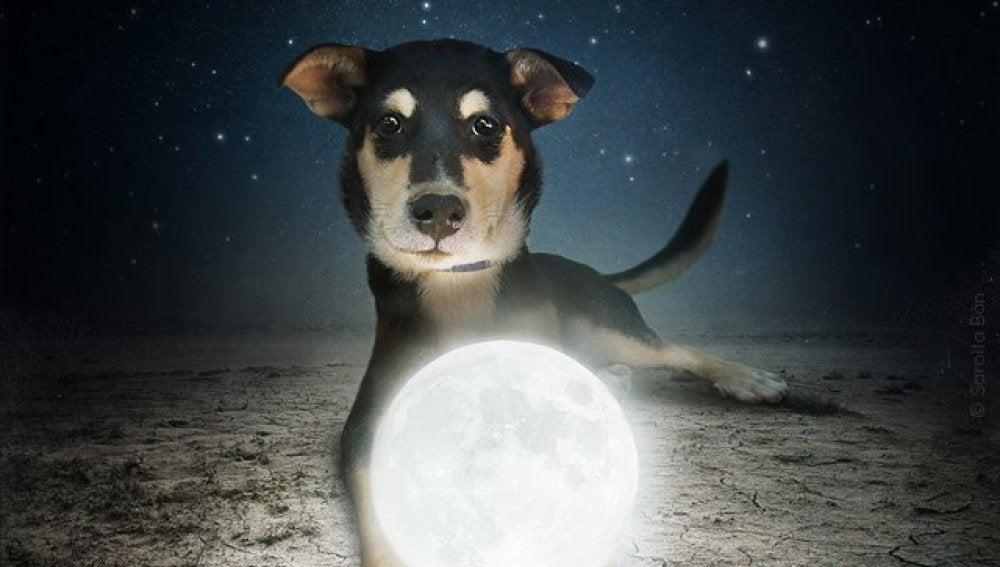 Un cachorro adoptado por la Luna