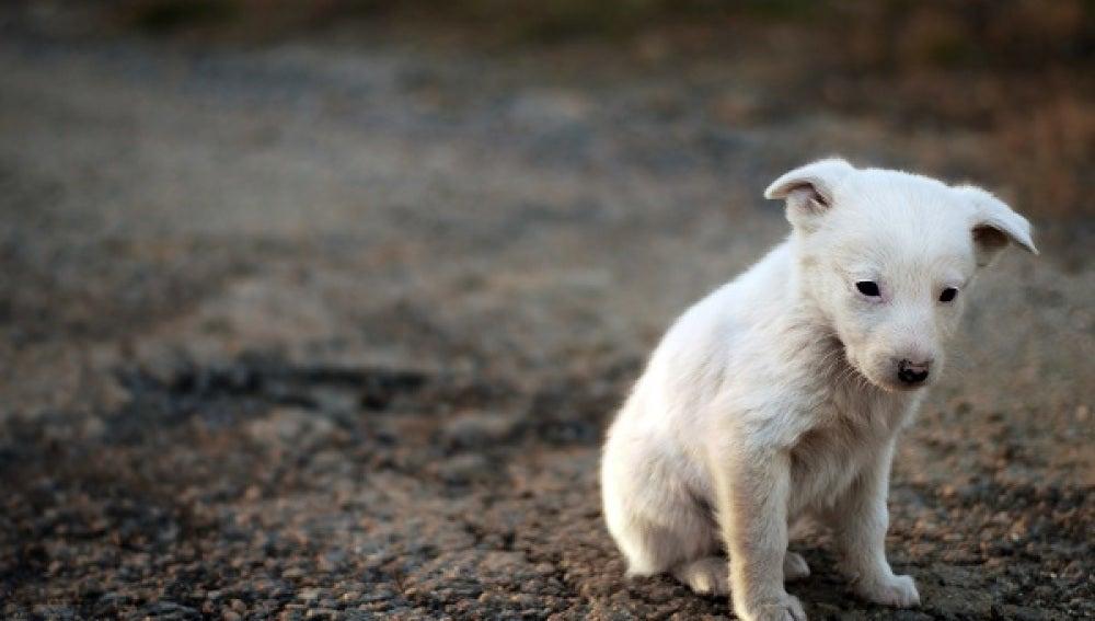 España ocupa los primeros puestos en Europa con mayor tasa de abandono de animales.