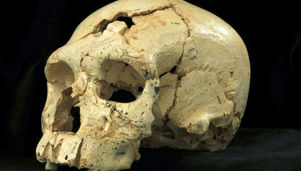 Cráneo número 17 de la Sima de los Huesos