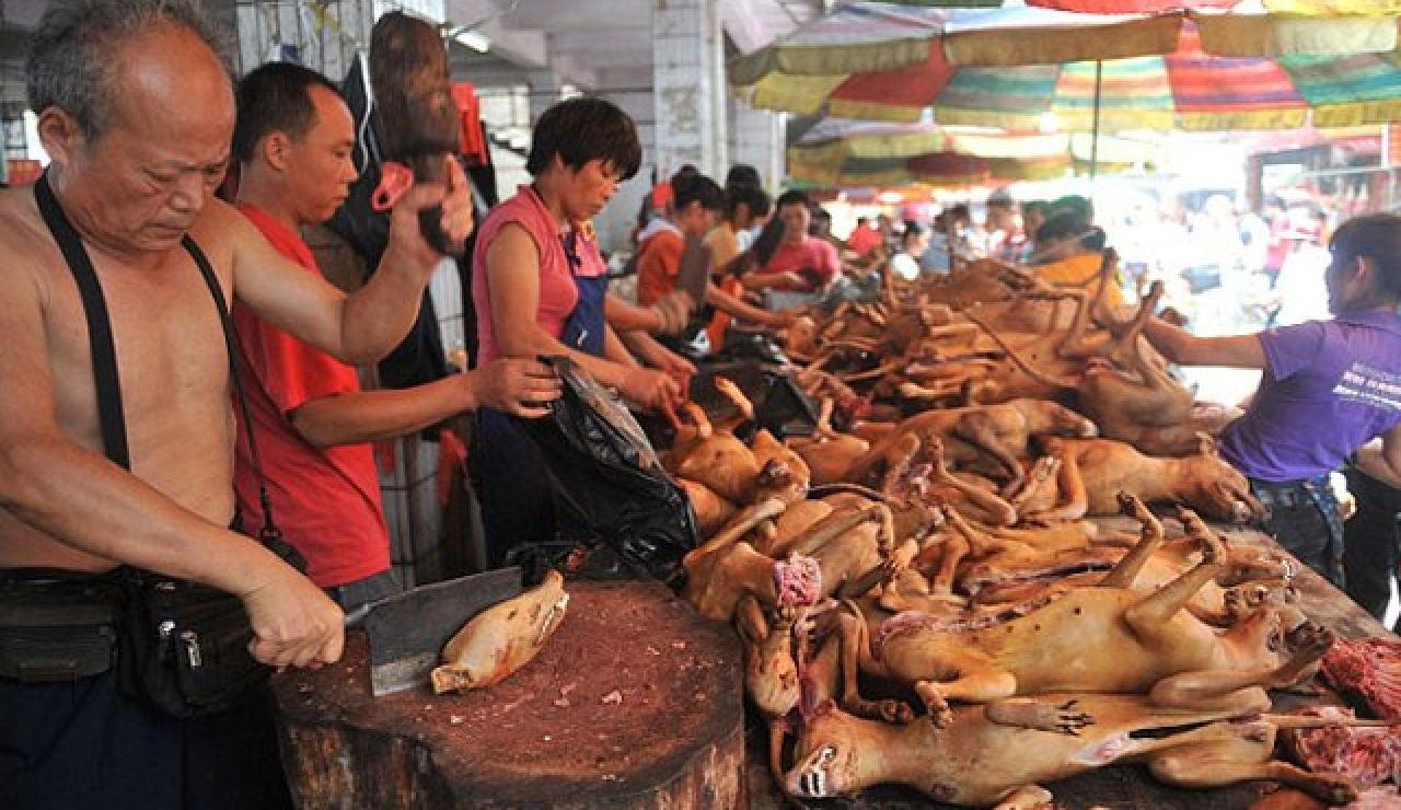 En Yulin (China) lo celebran con banquetes de perros