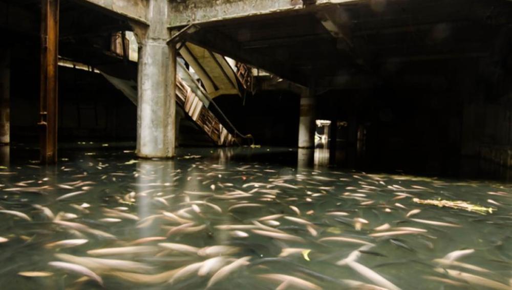 Miles de carpas atestadas en el suelo