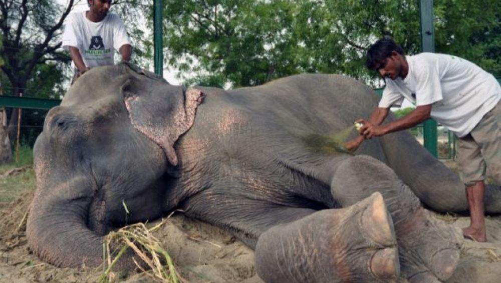 Raju con sus cuidadores tras ser liberado
