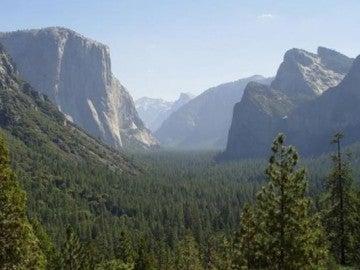 Los árboles salvan 850 vidas al año en EEUU