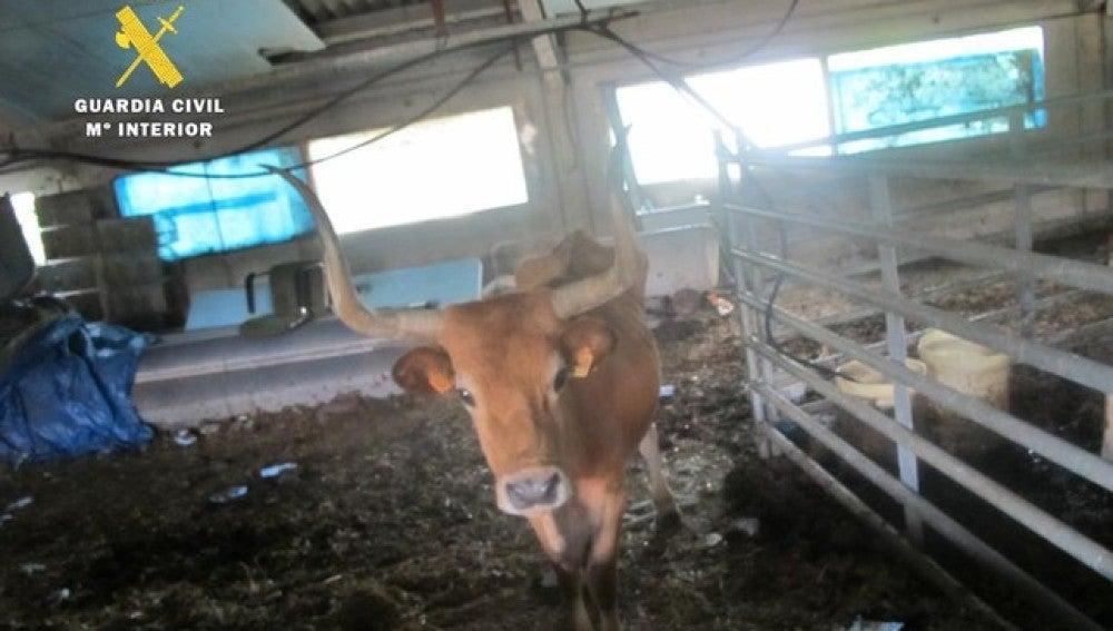 Seprona denuncia a un ganadero por maltrato y abandono de 37 animales domésticos
