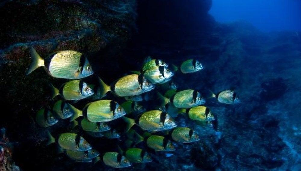 Peces en el mar de las Calmas
