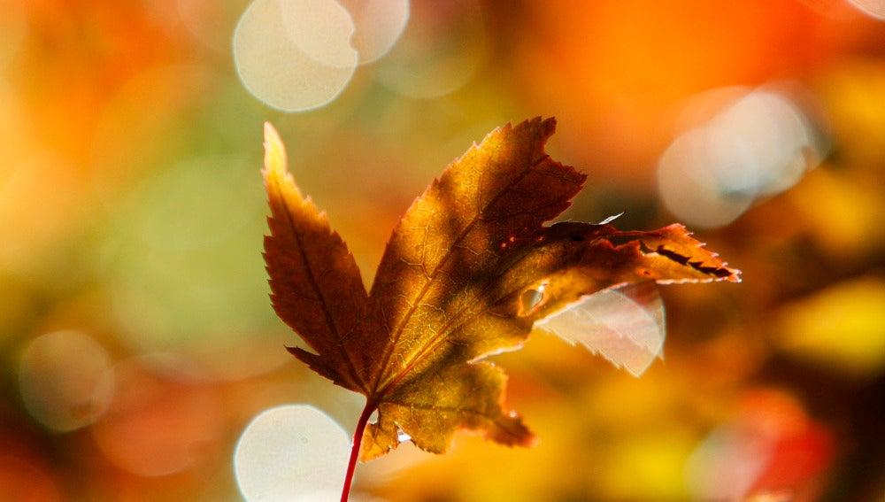 Una imagen de una hoja en otoño