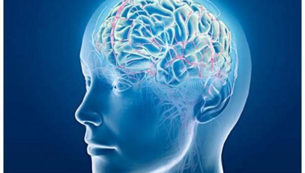 Un estudio identifica el punto débil del cerebro para el alzhéimer y la esquizofrenia