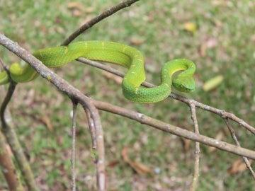 La percepción de las serpientes es muy e