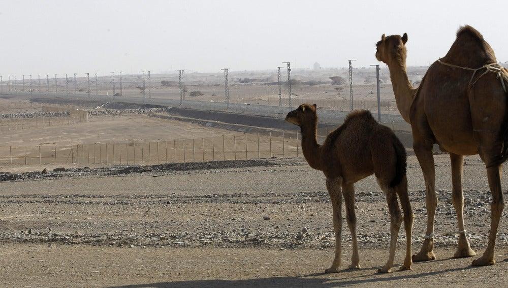 Arabia Saudí levanta muros en el desierto